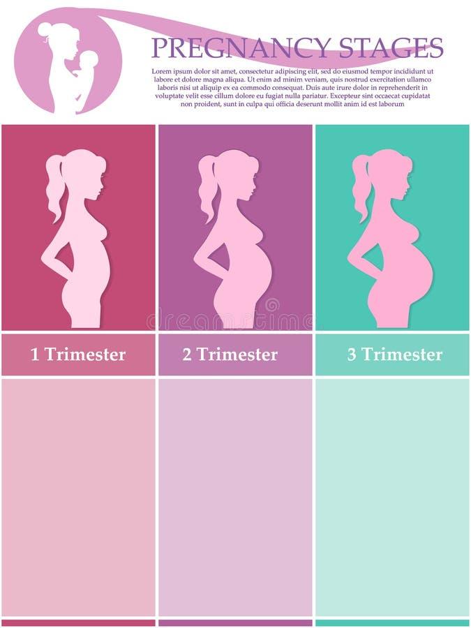 Schwangere Frau - zuerst, zweites und drittes Trimester lizenzfreie abbildung