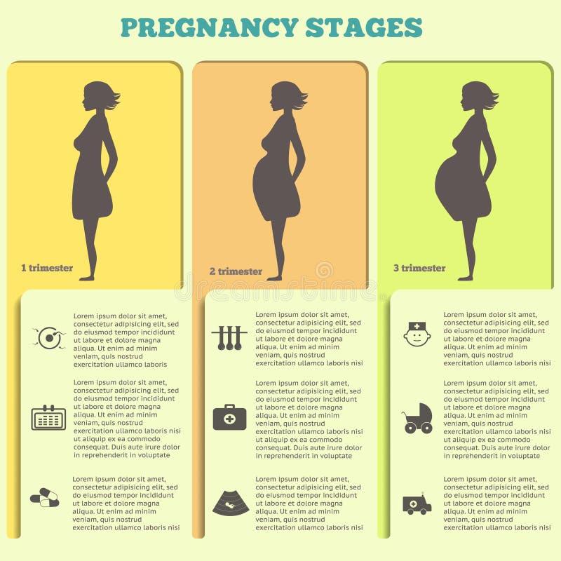 Schwangerschaft und Geburt infographics, Schwangerschaftsstadien vektor abbildung
