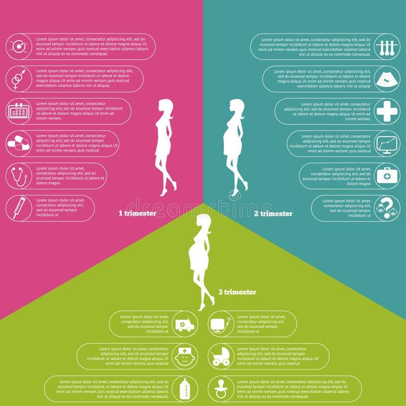 Schwangerschaft und Geburtsinfographics und -stadien lizenzfreie abbildung