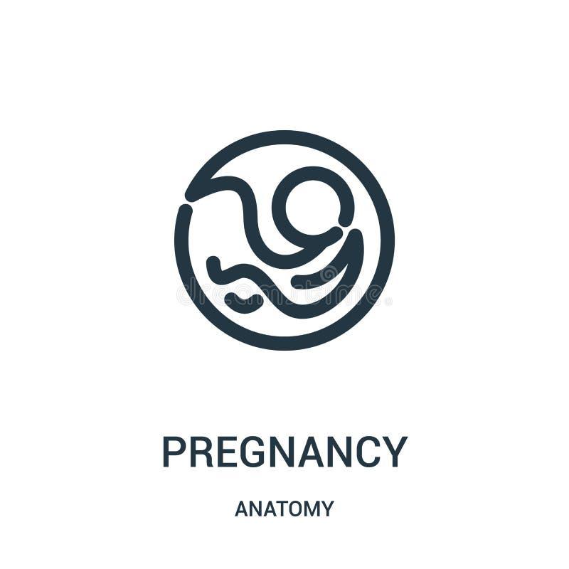 Schwangerschaftsikonenvektor von der Anatomiesammlung Dünne Linie Schwangerschaftsentwurfsikonen-Vektorillustration Lineares Symb stock abbildung