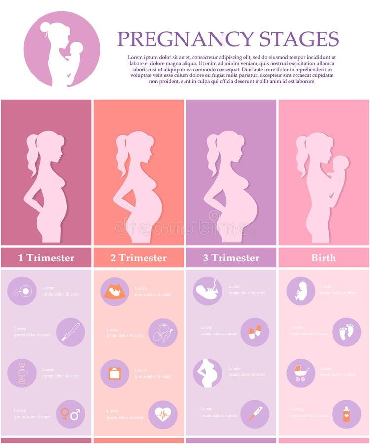 Schwangerschaftsstadien, -trimester und -geburt lizenzfreie abbildung