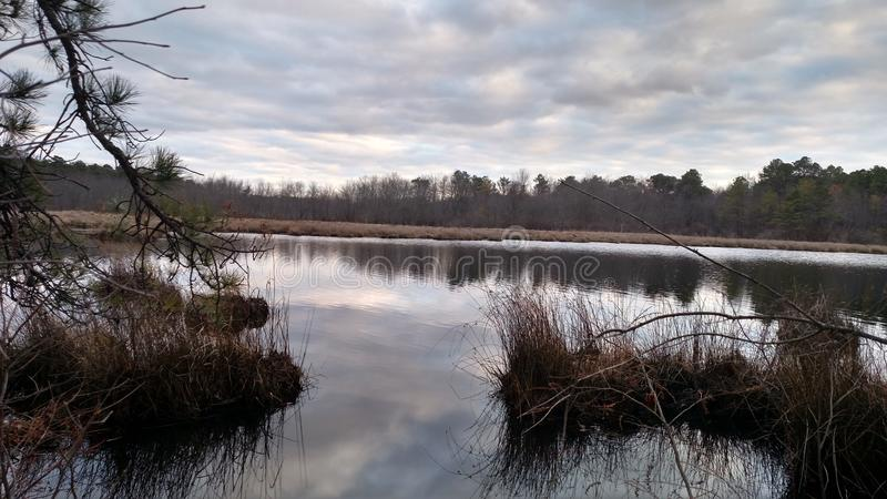 Schwarz-Laufkonserven-Sumpf stockbild