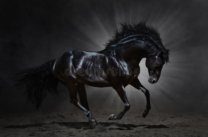 Schwarze andalusische Hengstgalopps lizenzfreie stockfotos