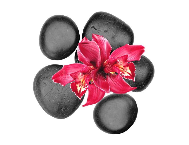 Schwarze Badekurortsteine und rosa Orchideenblume lokalisiert auf Weiß stockfoto