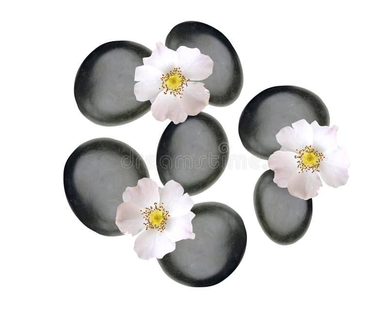 Schwarze Badekurortsteine und weiße Frühlingsblumen lokalisiert auf Weiß lizenzfreie stockbilder