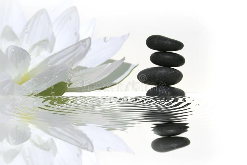 Schwarze balancierende Kiesel und Seeroseblume stockfotos