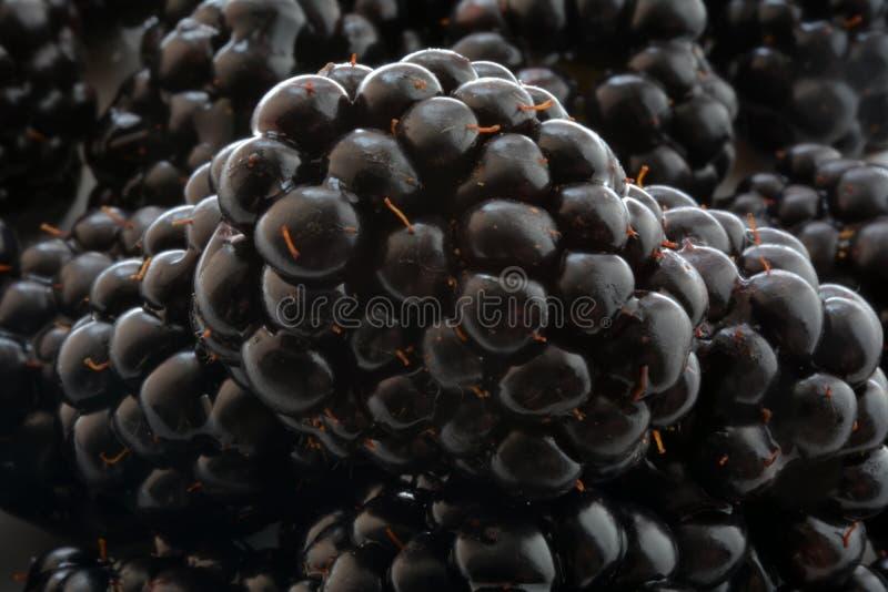Schwarze Blackberry-Nahaufnahme, Makrofoto stockbilder