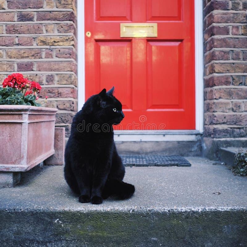 Schwarze Cat In Front Of Red-Tür stockfotografie