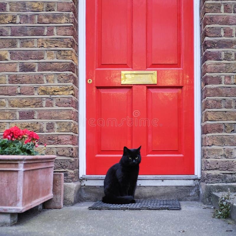 Schwarze Cat In Front Of Red-Tür lizenzfreies stockfoto