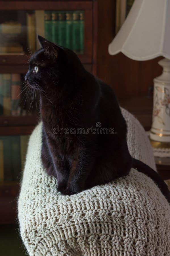 Schwarze Cat Looking Out Window stockbilder