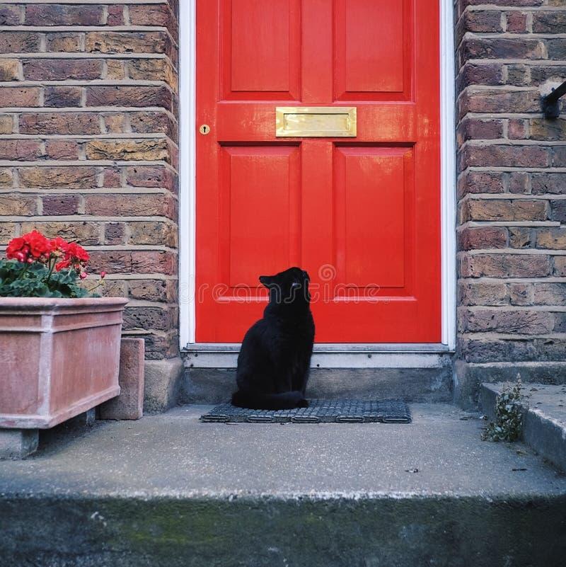 Schwarze Cat And Red Door stockfotografie