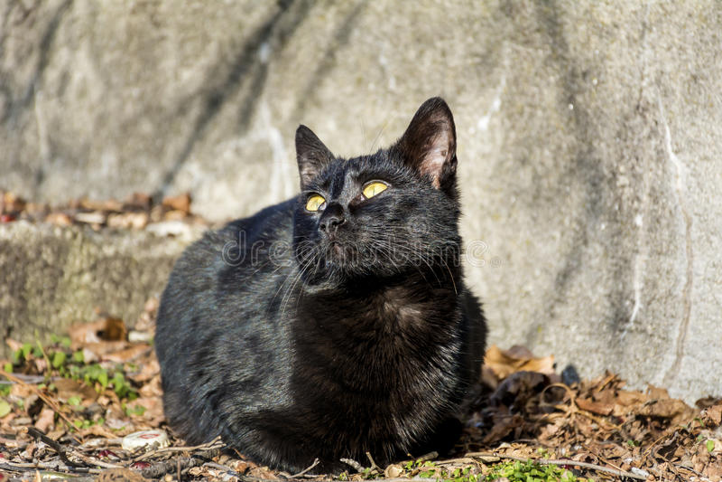 Schwarze Cat Sunbathing lizenzfreie stockfotografie