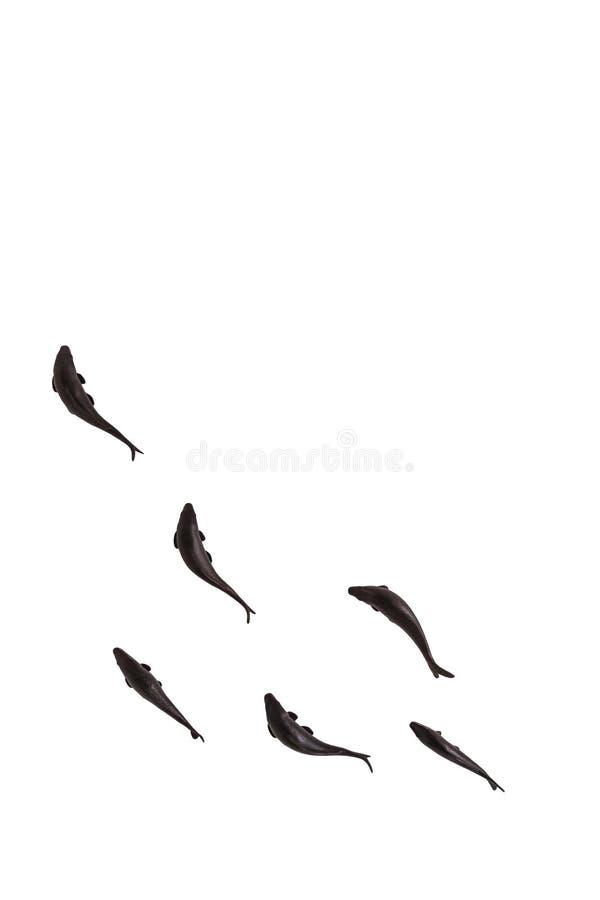 Schwarze Fische lokalisiert auf weißem Hintergrund lizenzfreies stockbild