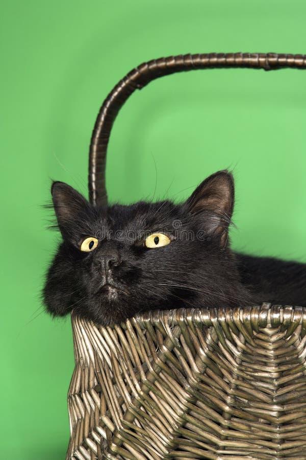Schwarze flaumige Katze im Korb. lizenzfreies stockbild