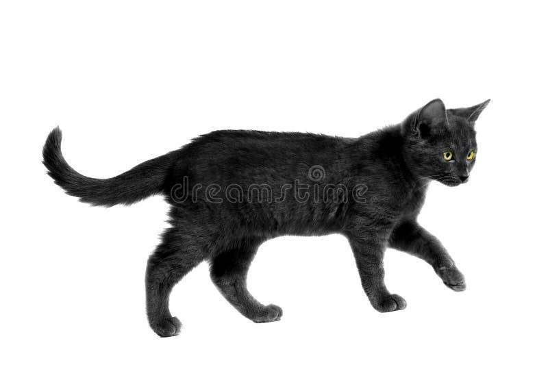 schwarze halloween katze stockfoto bild von berwachen 15389122. Black Bedroom Furniture Sets. Home Design Ideas