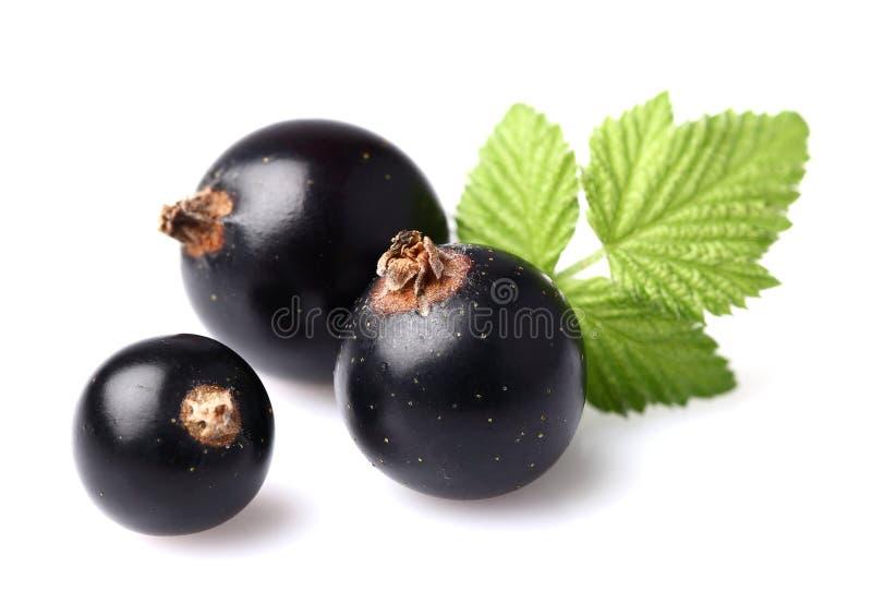 Schwarze Johannisbeere mit Blättern lizenzfreies stockbild