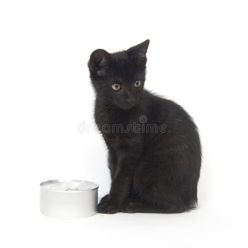 Schwarze Kätzchen- und Nahrungsmitteldose lizenzfreies stockfoto