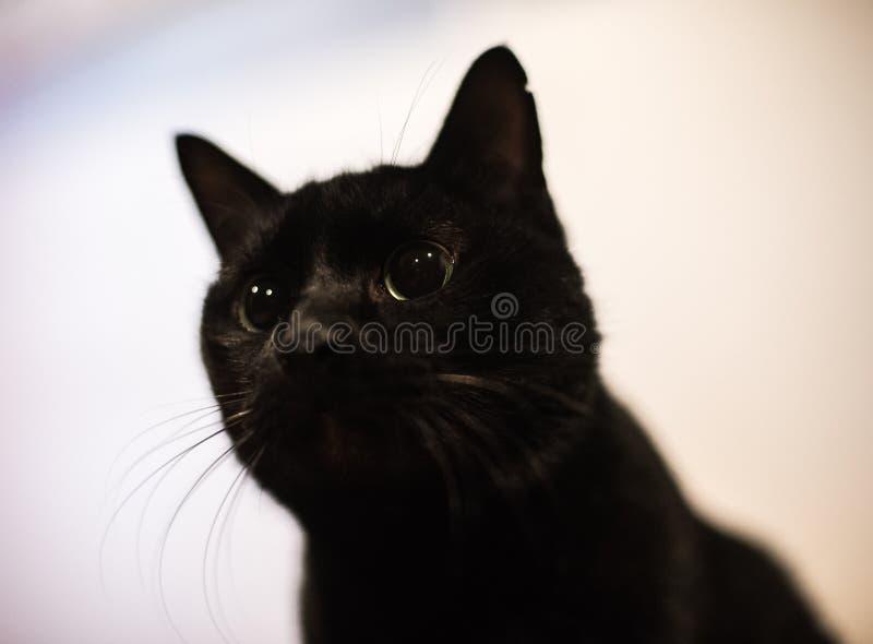 Schwarze Katze stockbilder