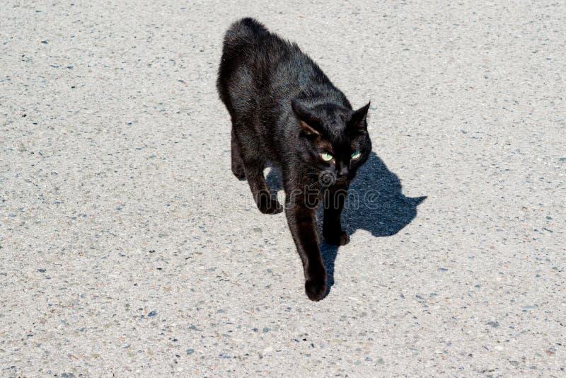 Schwarze Katze auf der Pflasterung im hellen Sonnenschein lizenzfreie stockfotos