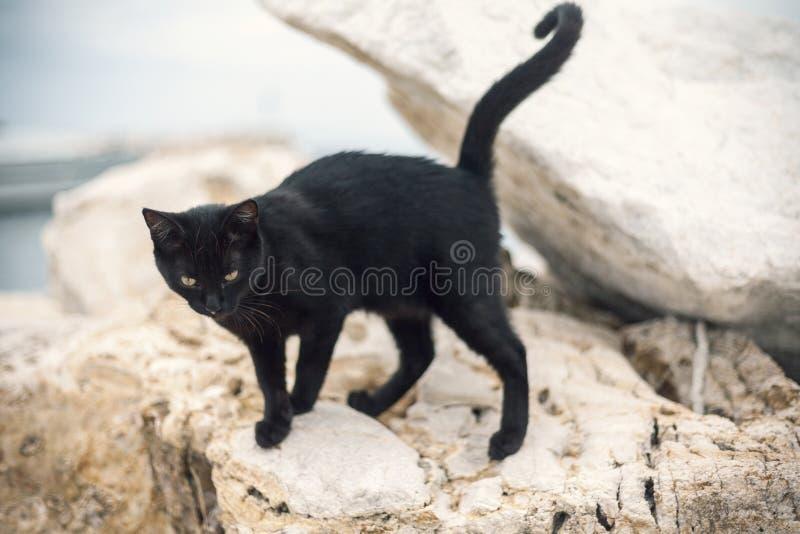 Schwarze Katze auf Stein lizenzfreie stockbilder