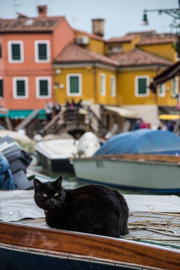 Schwarze Katze, die auf einem Boot liegt stockbild