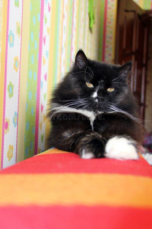Schwarze Katze, die auf farbige Rückseite des Sofas legt Domectic-Tier hat einen Rest lizenzfreies stockfoto