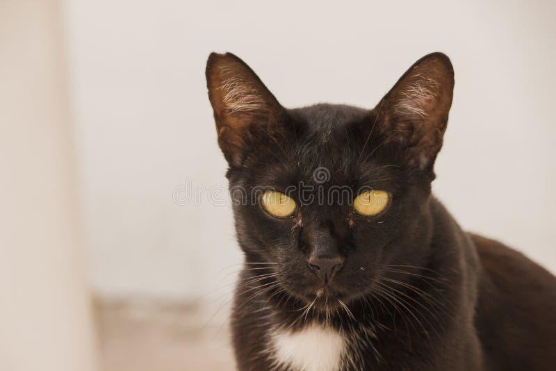 Schwarze Katze, die aus den Grund oben schaut liegt stockbild
