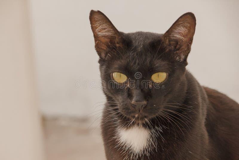 Schwarze Katze, die aus den Grund oben schaut liegt lizenzfreies stockbild