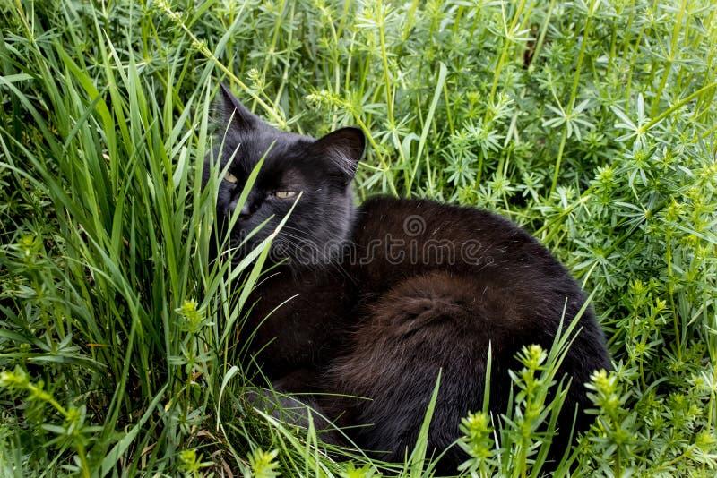 Schwarze Katze, die im Gras sich entspannt stockbilder