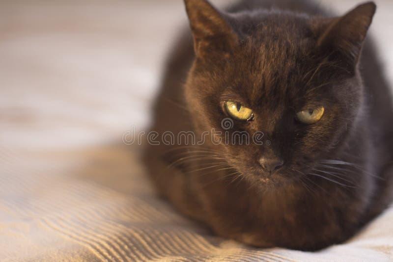 Schwarze Katze, die sich hinlegt stockfotos