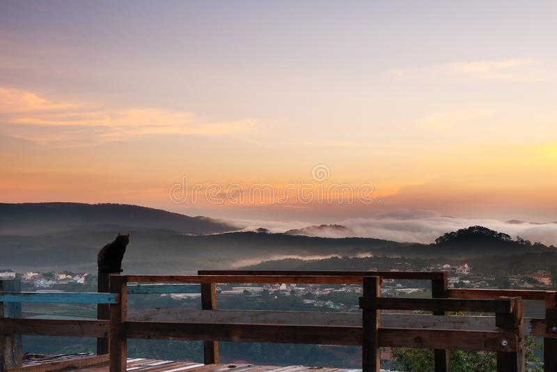 Schwarze Katze, die Sonnenaufgangszene betrachtet stockbild