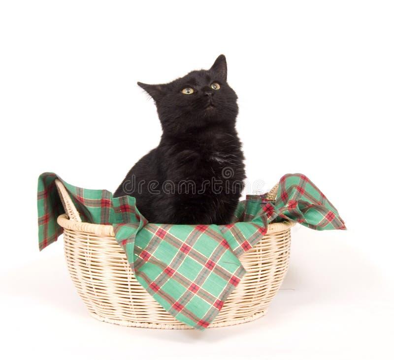 Schwarze Katze in einem Feiertagskorb stockfotos
