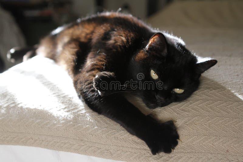 Schwarze Katze entspannt sich auf Bett stockfotografie