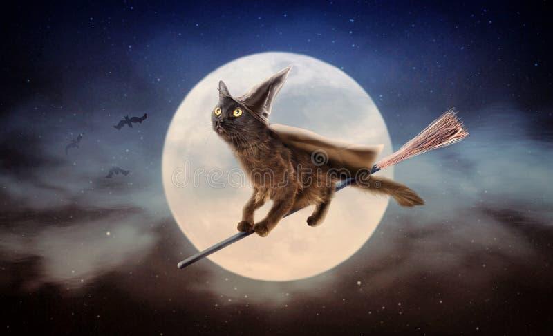 Schwarze Katze Halloweens auf Besen über Mond lizenzfreie stockbilder