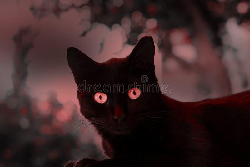 Schwarze Katze Halloweens mit roten Augen stockbilder