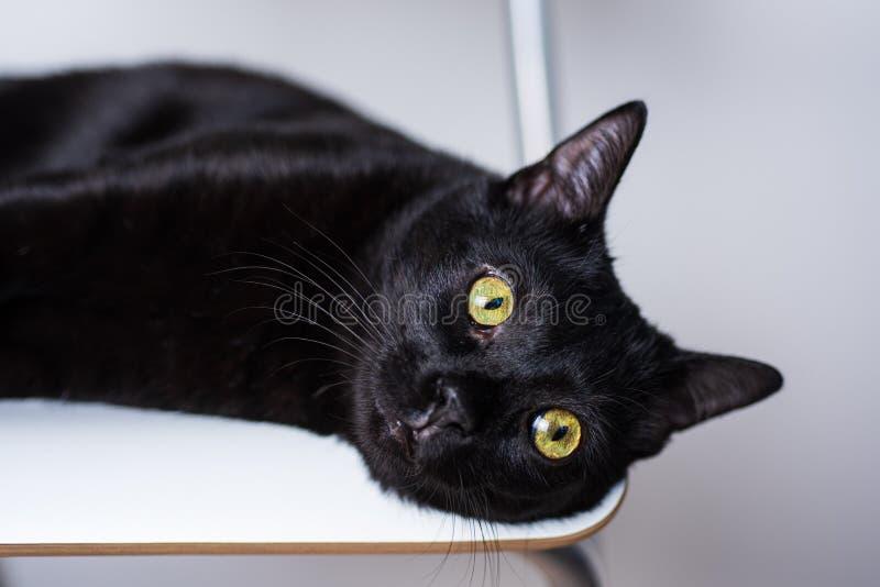 Schwarze Katze mit den gelben Augen, die auf dem weißen Stuhl schaut neben Kamera liegen lizenzfreie stockfotografie