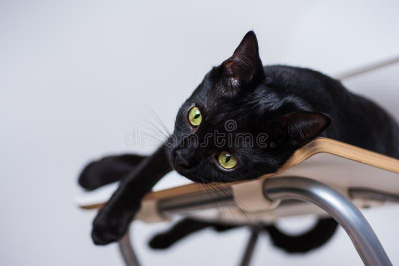 Schwarze Katze mit den gelben Augen, die auf weißem Stuhl liegen stockfoto