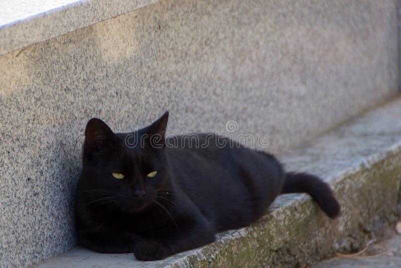 Schwarze Katze mit gelben Augen stockbilder