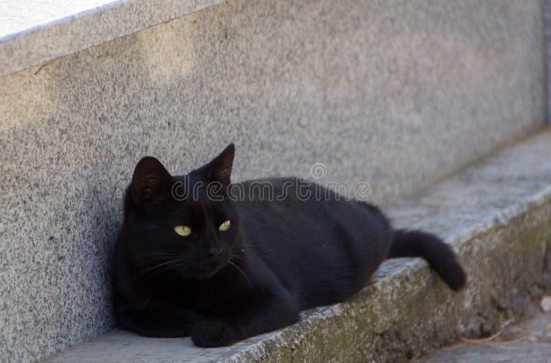 Schwarze Katze mit gelben Augen lizenzfreie stockbilder