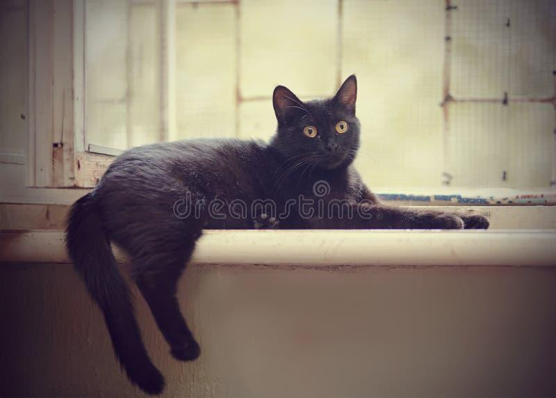 Download Schwarze Katze Mit Gelben Augen Liegt An Einem Fenster Stockbild - Bild von carnivore, katzenartig: 90228771