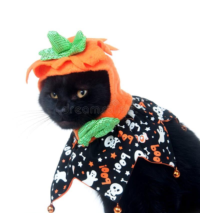 Schwarze Katze mit Kürbishut stockfotos