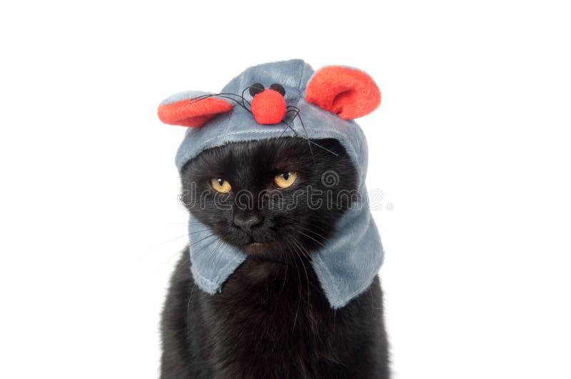 Schwarze Katze mit Mäusehut lizenzfreies stockfoto
