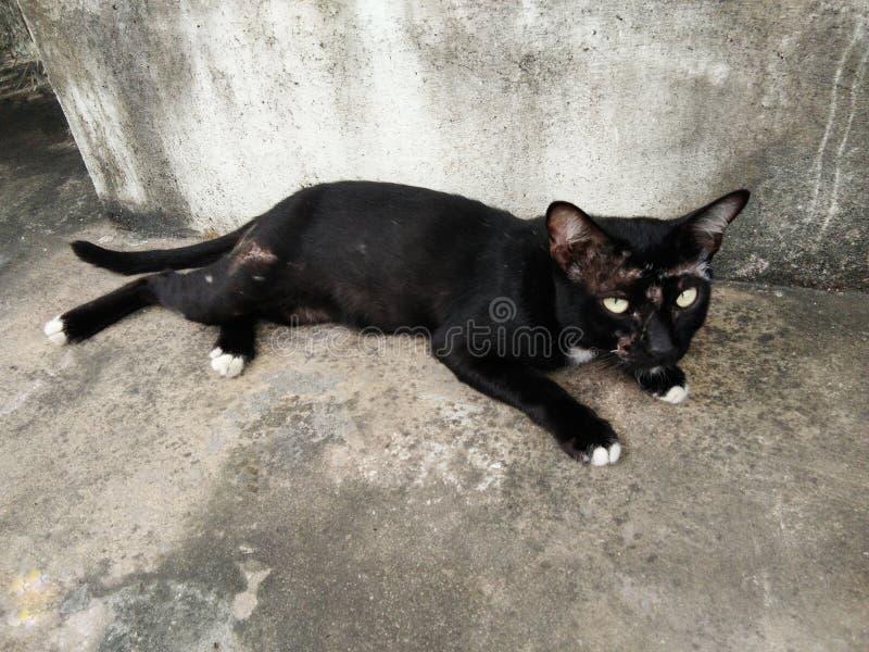 Schwarze Katze mit Wunde lizenzfreie stockfotos