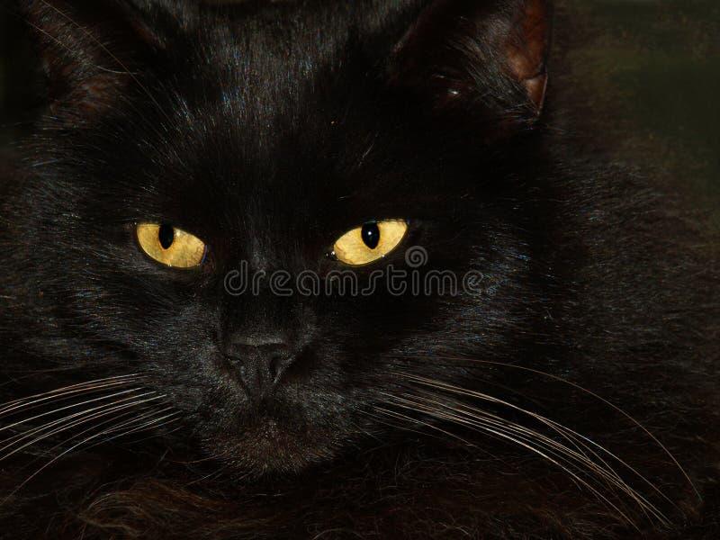 Schwarze Katze mit zwei gelben Augen lizenzfreie stockbilder
