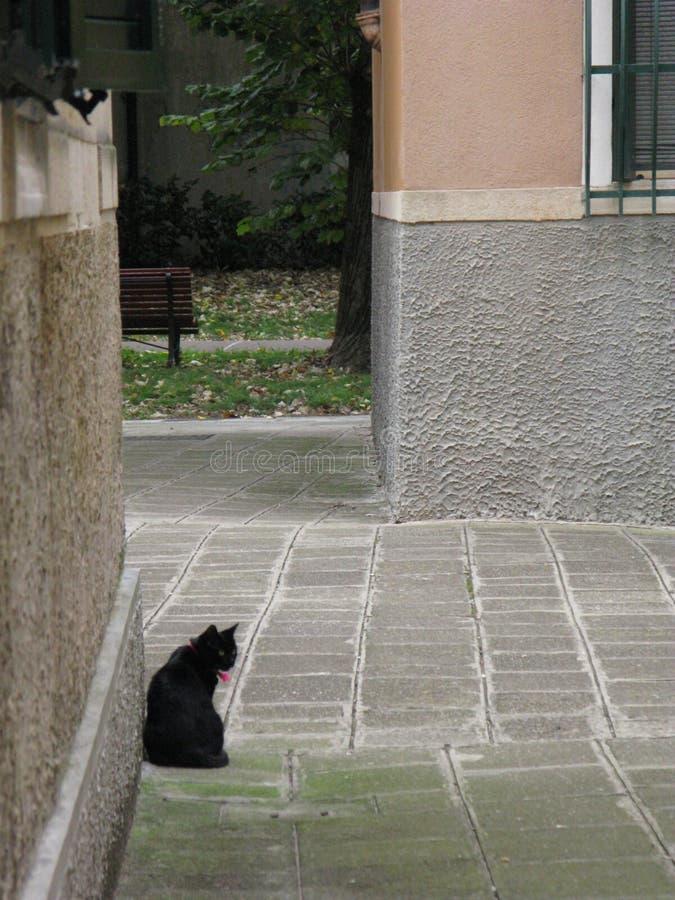 Schwarze Katze in Venedig stockbilder