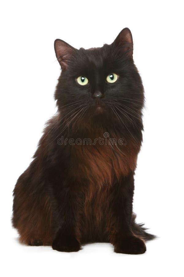 Schwarze Katze vor einem weißen Hintergrund lizenzfreie stockbilder