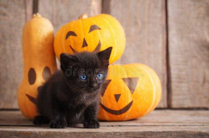 Schwarze kleine Katze mit Halloween-Kürbisen lizenzfreie stockfotos