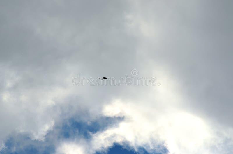 Schwarze Kontur des einzelnen Vogelfliegens auf bewölktem Himmel lizenzfreies stockfoto