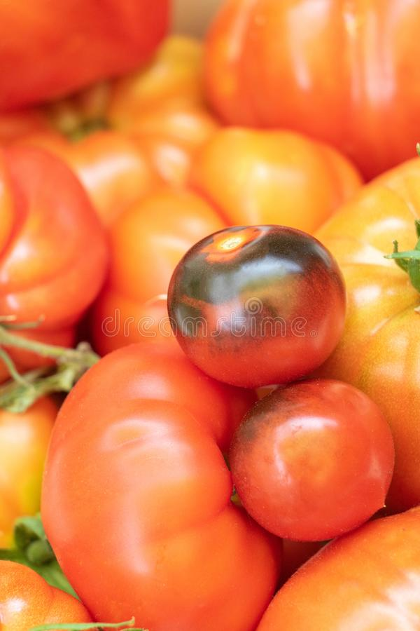 Schwarze Krimtomate, blauer Cherry Tomato, Ananas-Tomate, grüne Tomate, Tomaten-Rindfleisch-Herz stockbild