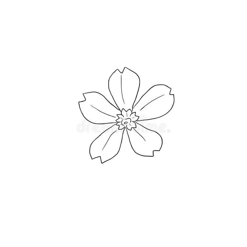 Schwarze Linie gezogener Vektor Art Creeping Phlox Flowers in der Hand vektor abbildung